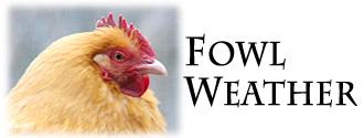 fowl weather tarte bob